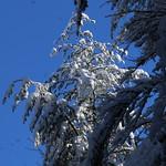 Auburn NH Winter Wonderland 55