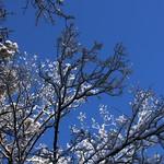 Auburn NH Winter Wonderland 59
