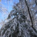 Auburn NH Winter Wonderland 91