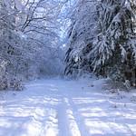 Auburn NH Winter Wonderland 38