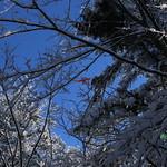 Auburn NH Winter Wonderland 40