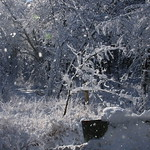 Auburn NH Winter Wonderland after the Snow 12302016