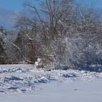 Auburn NH Winter Wonderland 18