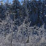 Auburn NH Winter Wonderland 30