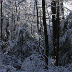 Auburn NH Winter Wonderland 36
