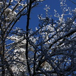 Auburn NH Winter Wonderland 58