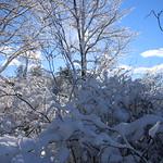 Auburn NH Winter Wonderland 12