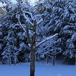 Auburn NH Winter Wonderland 69