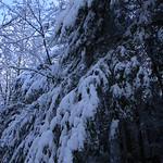 Auburn NH Winter Wonderland 45