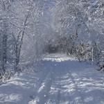 Auburn NH Winter Wonderland 79
