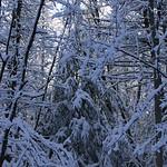 Auburn NH Winter Wonderland 46
