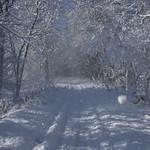 Auburn NH Winter Wonderland 80