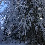 Auburn NH Winter Wonderland 43