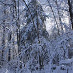 Auburn NH Winter Wonderland 105