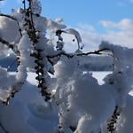 Auburn NH Winter Wonderland 13