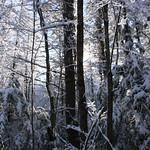 Auburn NH Winter Wonderland 39