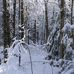Auburn NH Winter Wonderland 41