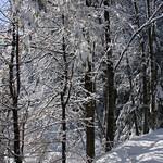 Auburn NH Winter Wonderland 90