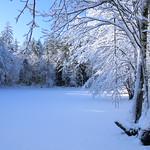 Auburn NH Winter Wonderland 68