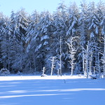 Auburn NH Winter Wonderland 62