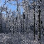 Auburn NH Winter Wonderland 22