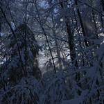 Auburn NH Winter Wonderland 103