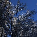 Auburn NH Winter Wonderland 57