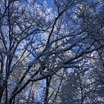 Auburn NH Winter Wonderland 47