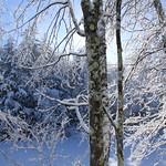 Auburn NH Winter Wonderland 82