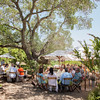 """Guests lunched in the shade of old oak trees while enjoying the view of Oakville vineyards.  Photo by <a href=""""http://www.tinacciphoto.com"""" target=""""_blank"""">Jason Tinacci</a> for the Napa Valley Vintners."""