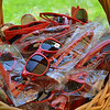 "A basket of red sunglasses awaits vintners eager to put their ""Happy"" on following the kickoff meeting."