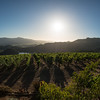 "The view from Viader.   Photo by <a href=""http://napasphotographer.com/"">Bob McClenahan</a> for Napa Valley Vintners."
