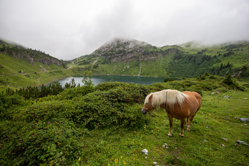 Pferd am Formarinsee, Vorarlberg, Österreich