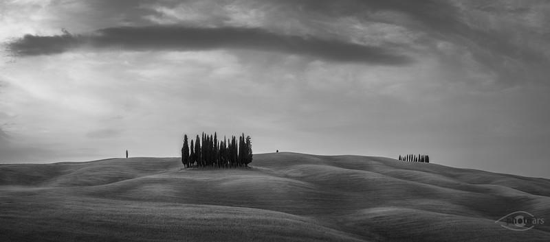 Zypressengruppe nahe Torrenieri, Toskana, Italien