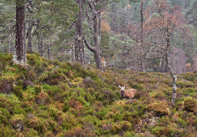 Glen Affric, Highlands, Schottland
