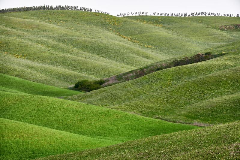 Hügel nahe Torrenieri bei Zypressengruppe, Toskana, Italien