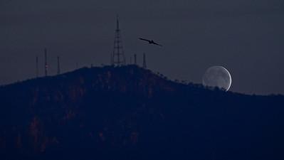 Mt. Stuart, Townsville, Kite and Moon.