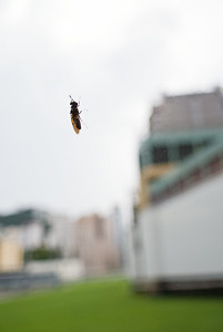 Bug resting