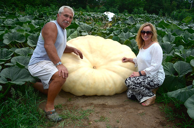 8/16/2016 Mike Orazzi | Staff Garry Vincent, a retired Bristol police officer, grows pumpkins that weigh more than 1,000 lbs at an undisclosed location in Plainville with Kimberly Selvaggi, executive director LISA Inc.