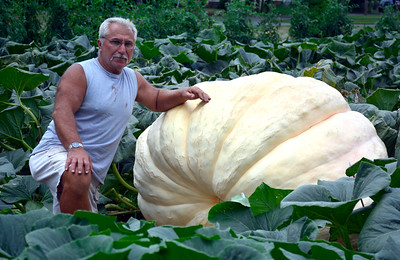 8/16/2016 Mike Orazzi | Staff Garry Vincent, a retired Bristol police officer, grows pumpkins that weigh more than 1,000 lbs at an undisclosed location in Plainville.