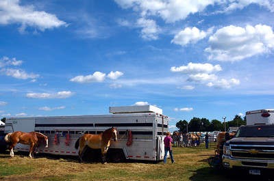 8/27/2016 Mike Orazzi   Staff Horse at the 68th  annual Terryville Lions Country Fair Saturday afternoon