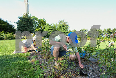 080317  Wesley Bunnell | Staff  Members of the Friends of the Walnut Hill Park Rose Garden met on Thursday for a group clean up.  Phil Barlow of TO Design works alongside Nancy Fenton weeding a section of garden.