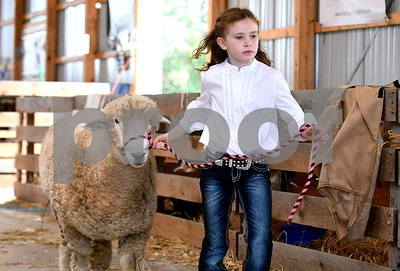 8/26/2017 Mike Orazzi | Staff Penny Kemp on her way to show Sven in the sheep show at the Terryville Lions County Fair Saturday morning.