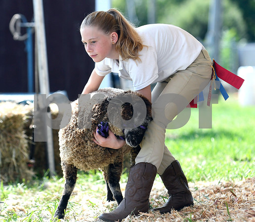8/26/2017 Mike Orazzi | Staff Olivia Pouder shows a sheep at the Terryville Lions County Fair Saturday morning.
