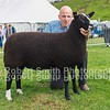 Zwartbles Champion Gimmer from S Craig