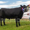 Reserve Interbreed Beef Champion WD Allen Stouphill