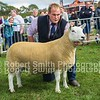 Interbreed Sheep Champion 2 shear NCC (Hill) from WN Douglas