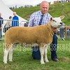 Interbreed Reserve Champion Texel Gimmer from Ian Murray