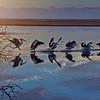 """""""Pelican Landing at Sunrise, Mallacoota Inlet, Victoria."""""""