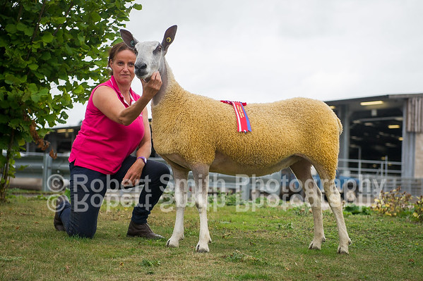 Bluefaced Leicester Progeny Show at Welshpool Mart - August 20th 2018